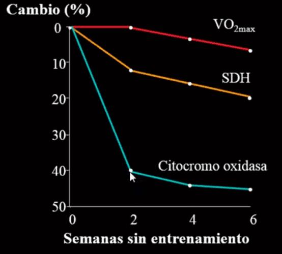 Desentrenamiento y capacidad oxidativa(3).