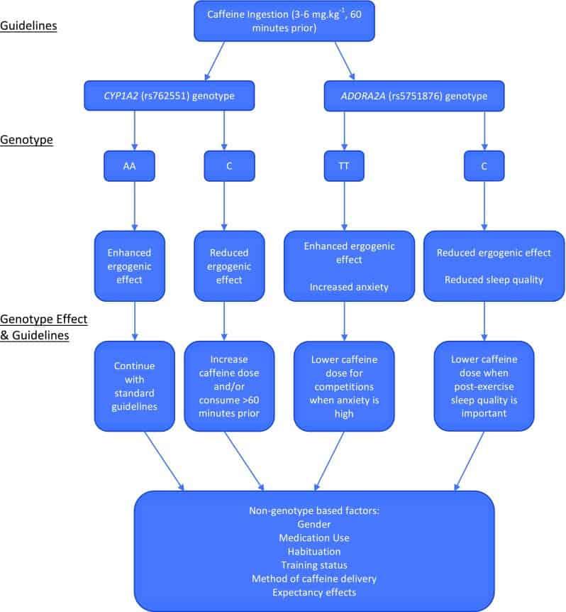 Factpres genéticos y no genéticos qie omfluyen en la decisión de la ingesta de cafeína