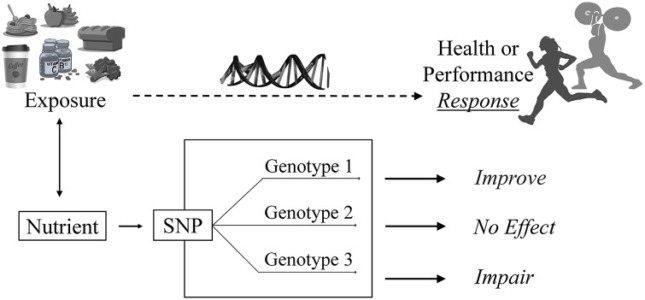 Efecto ergogénico según la predisposición genética