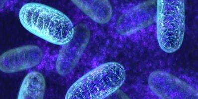 mitocondrias y ejercicio físico.