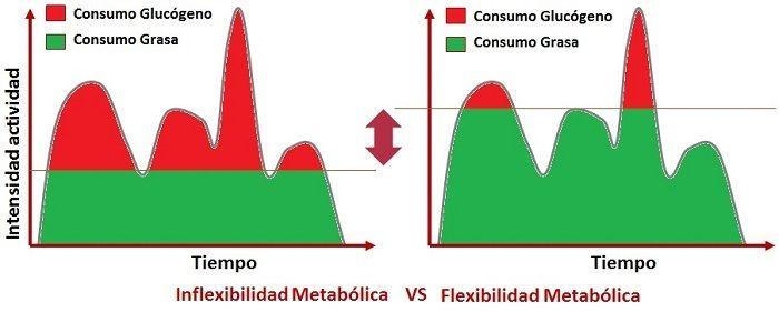 inflexibilidad metabólica