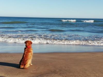Mascota esperando