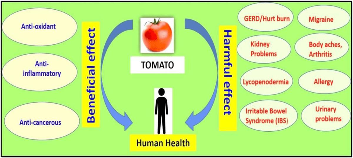 imagen 2: tomate mucho más que licopeno