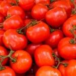 imagen destacada tomate mucho más que licopeno