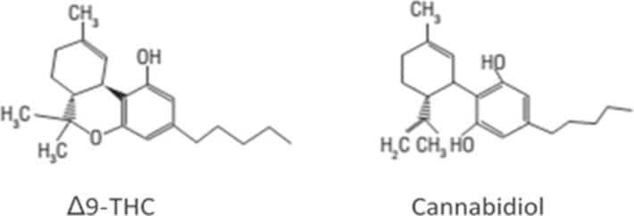 Aceite CBD ¿Qué es y para que sirve esta sustancia? 1