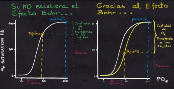 Gráfica comparativa sobre el Efecto Bohr.