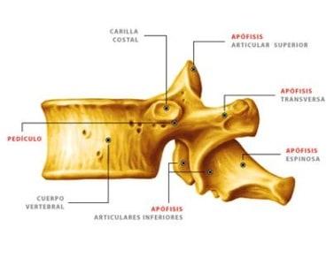 Huesos de la espalda