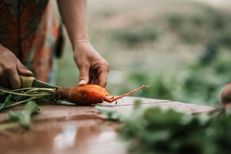 zanahorias como vegetales para mejorar la salud