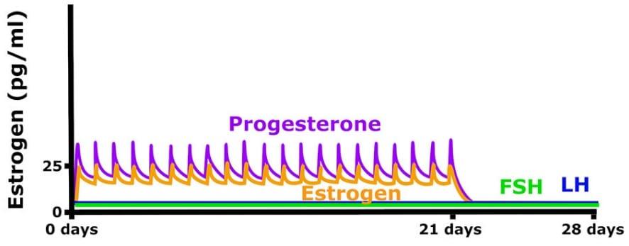 anticonceptivos orales en ciclo menstrual