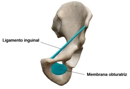 Ligamento inguinal y membrana obturatriz