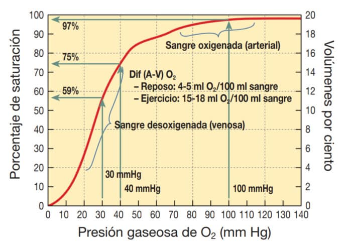 Modificación del porcentaje de Hb con el ejercicio físico.