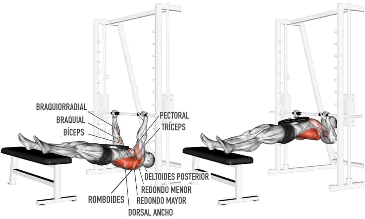 musculatura en el remo invertido