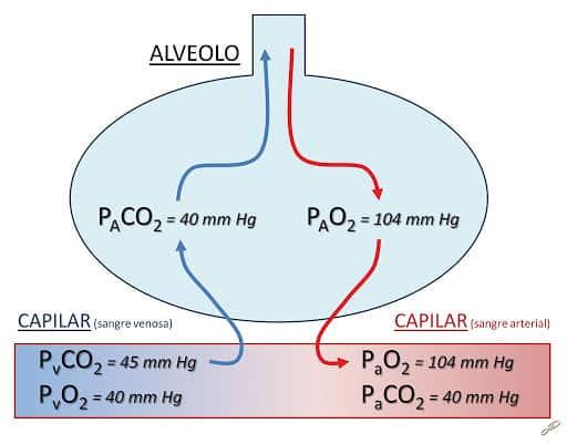 presión de gases