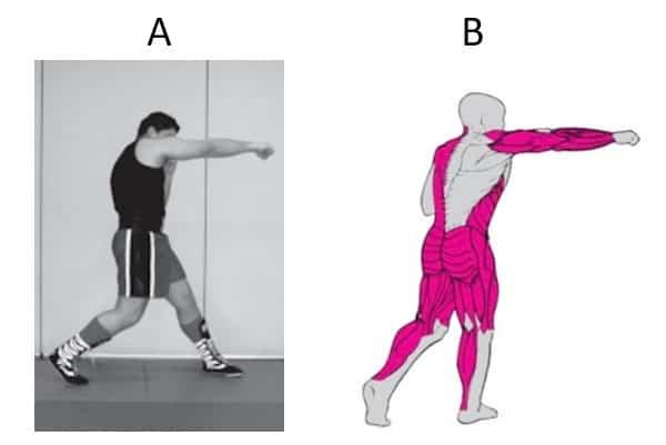 técnica de golpe recto y músculos implicados