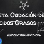 beta-oxidación de ácidos grasos