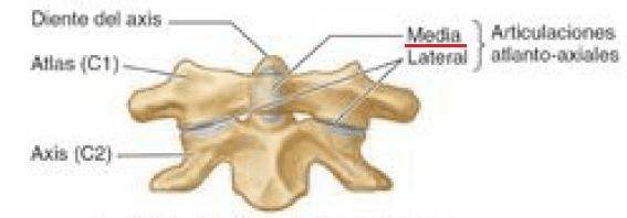 Articulación atlantoaxial media