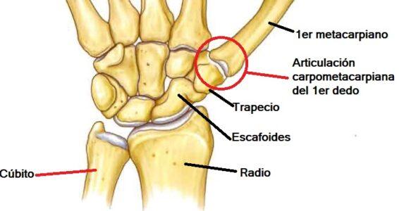 Articulación carpometacarpiana del primer dedo