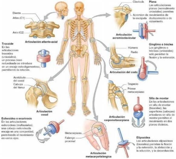 Tipos de articulaciones sinoviales