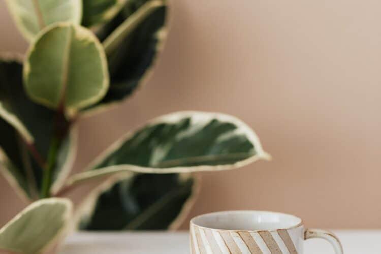 tanto el extracto de té verde como la infusión ayudan a perder peso