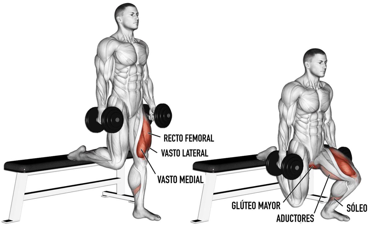 Musculatura implicada en la sentadilla búlgara