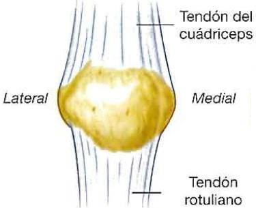 Ligamento rotuliano
