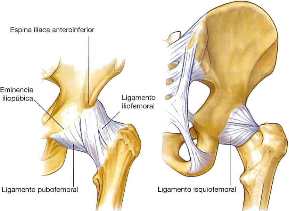 Ligamentos de la cadera