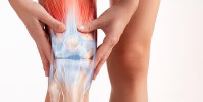 articulaciones de la pierna