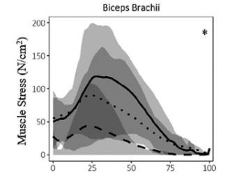 Perfil de estrés muscular en los pull ups